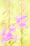 Pastel garden
