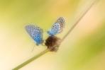 Butterfly Walz